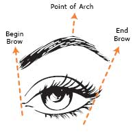 eyebrows-right-shape (1)