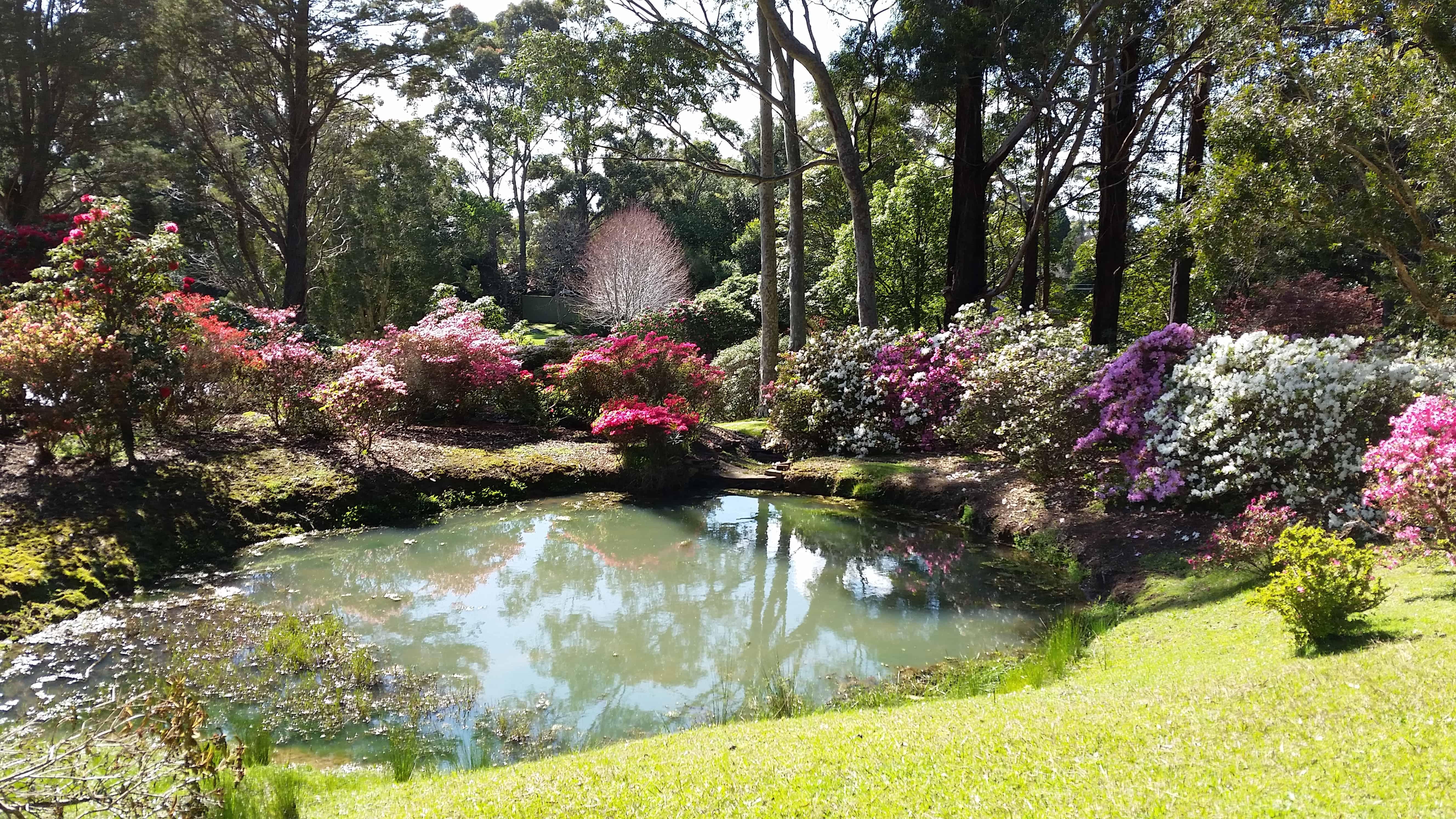 Rhododeren gardens, balgownie