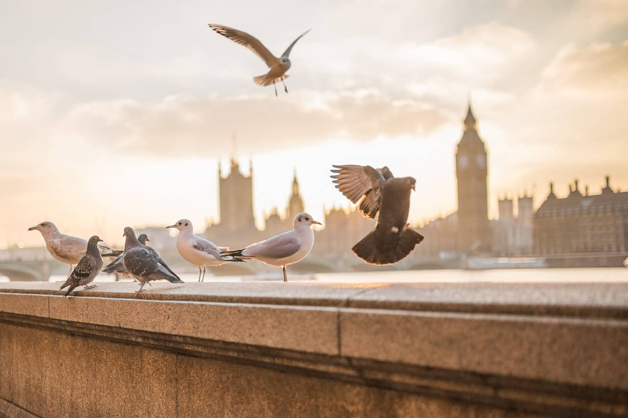 A Tourist in Your Hometown: Useful Tips for London, England - United Kingdom Edition! uk-nature-best weather