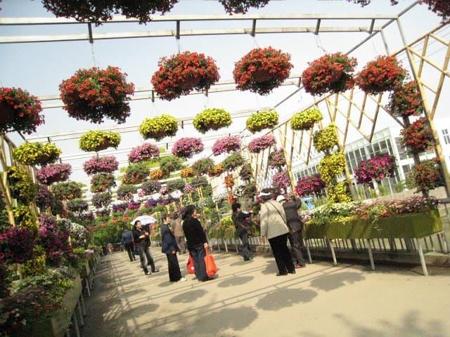shanghai-garden-16