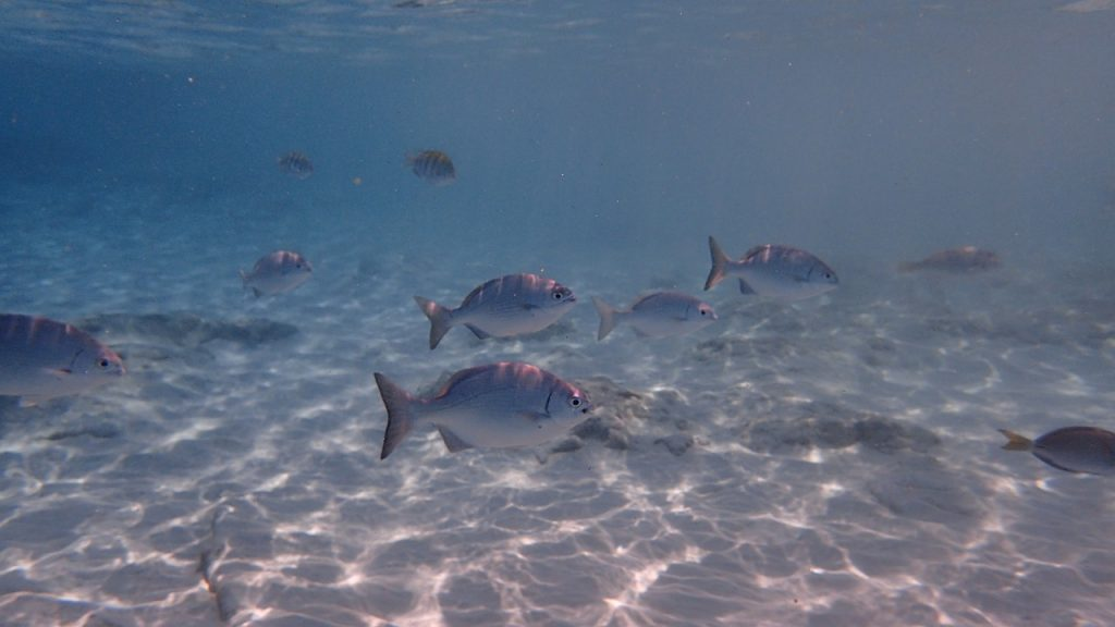 fish-underwater-cozumel-mexico
