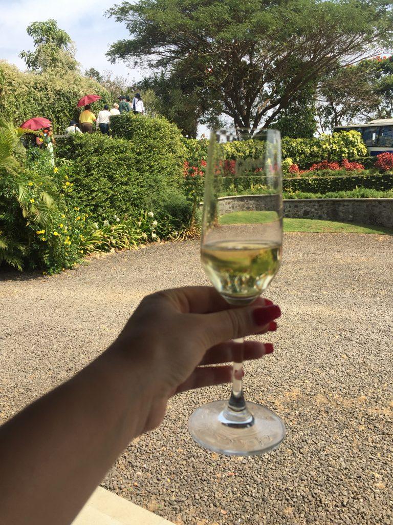 Sparkling Wine - wine tasting in Nashik Vineyards - Grover Zampa Wine