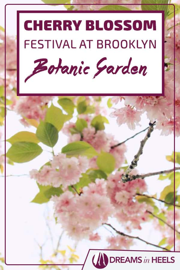A New Yorker's Guide to the 2019 Annual Spring Cherry Blossom Festival at the Brooklyn Botanic Garden