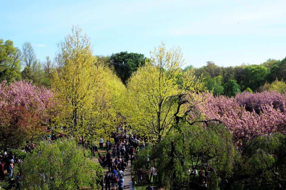A New Yorker's Guide to the Annual Spring Cherry Blossom Festival at the Brooklyn Botanic Garden