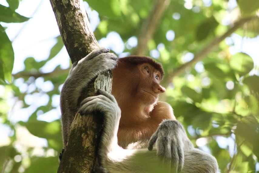 monkey-malaysia-trip