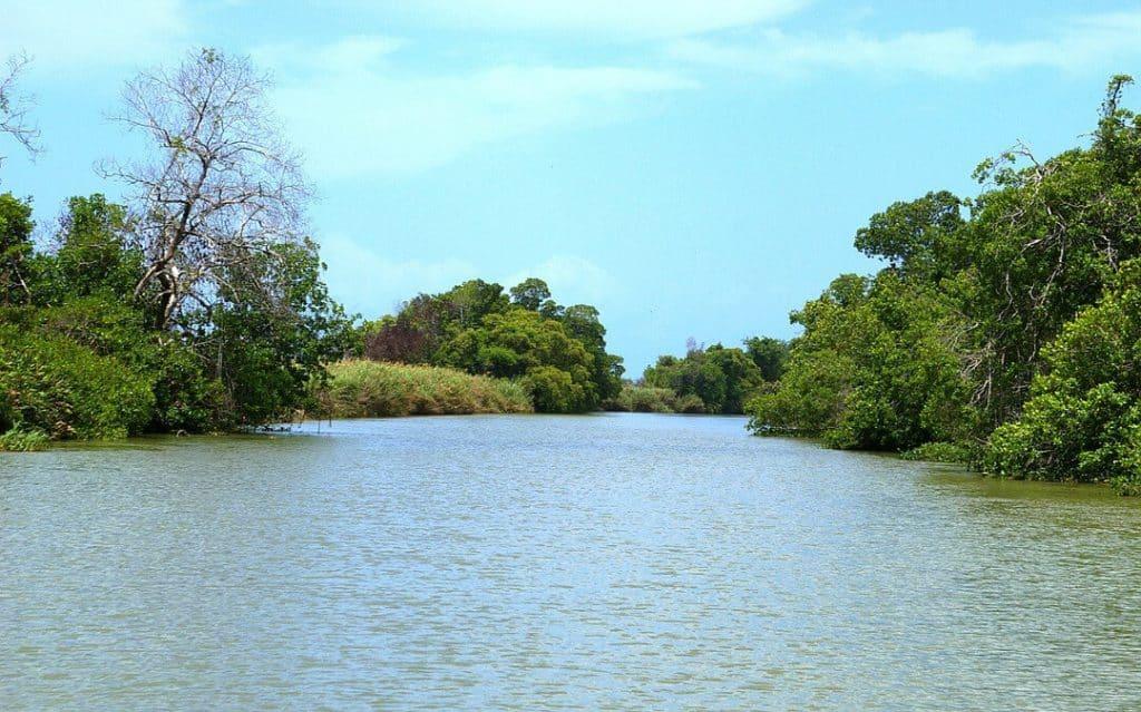 Black River Safari off the beaten path jamaica