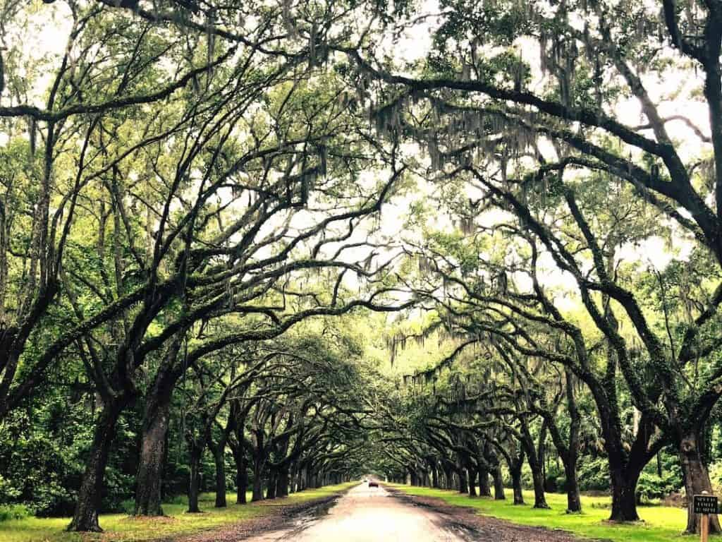 One day in Savannah_ Here are the Best Things to do in Savannah GA if you only have 24 hours!