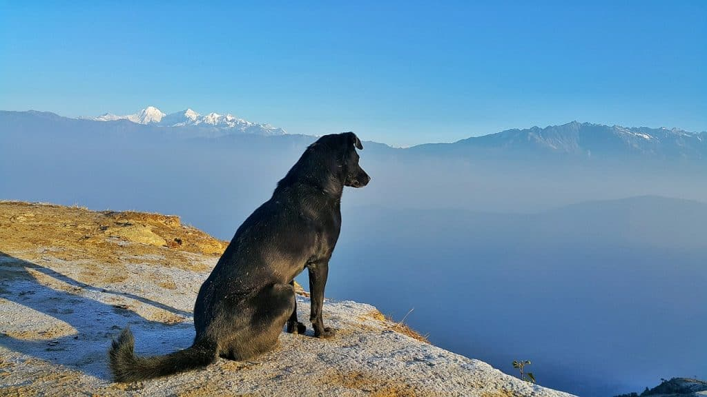 dog-friendly-activities-things-to-do-in-bend-oregon
