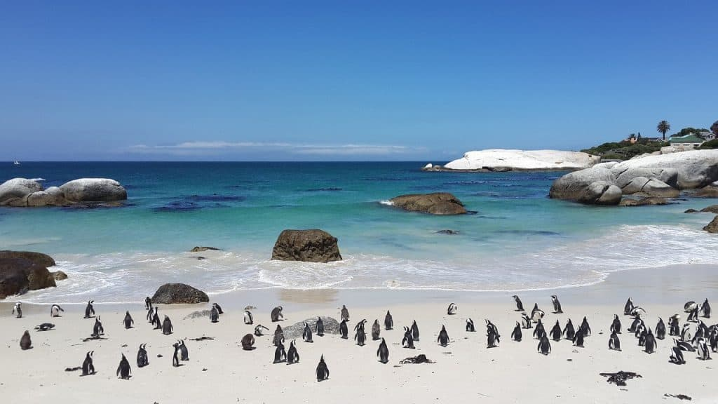 penguins-boulders-beach-cape-town-south-africa