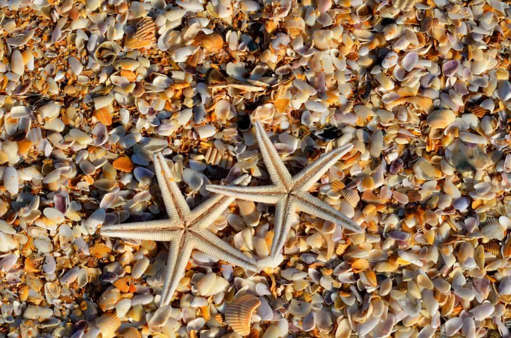 starfish-sea-life-beach