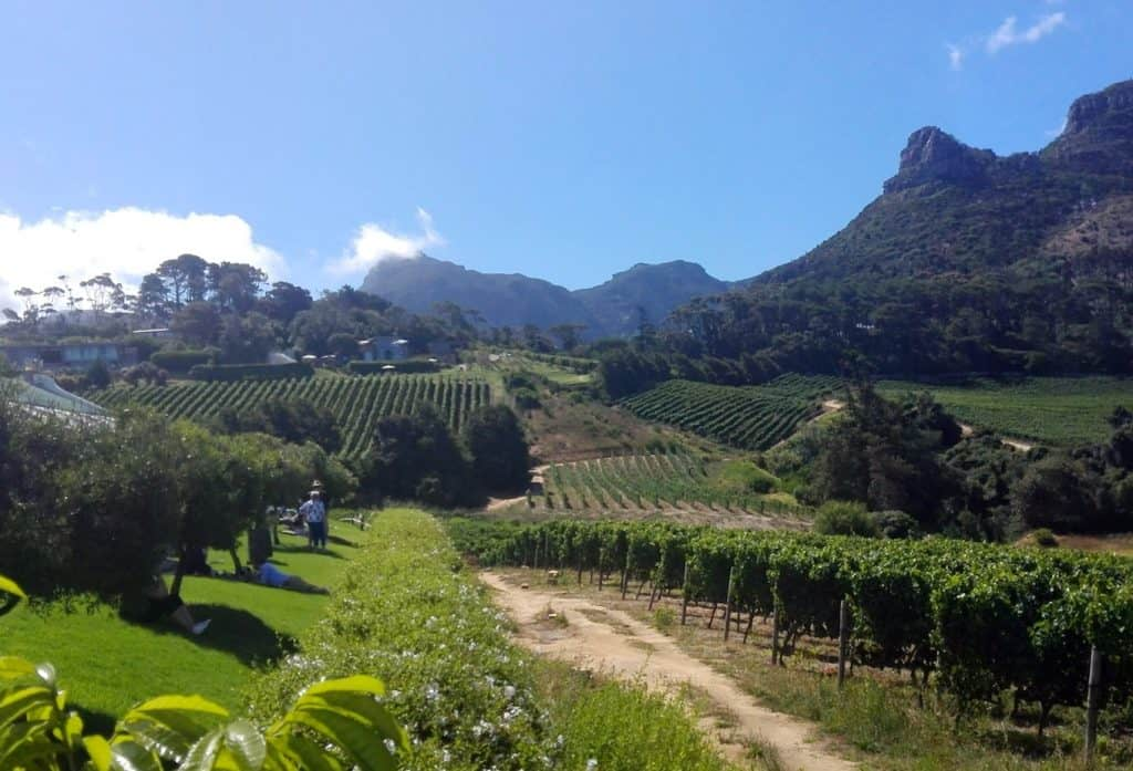 wine-lovers-vineyards-capetown-itinerary-south-africa