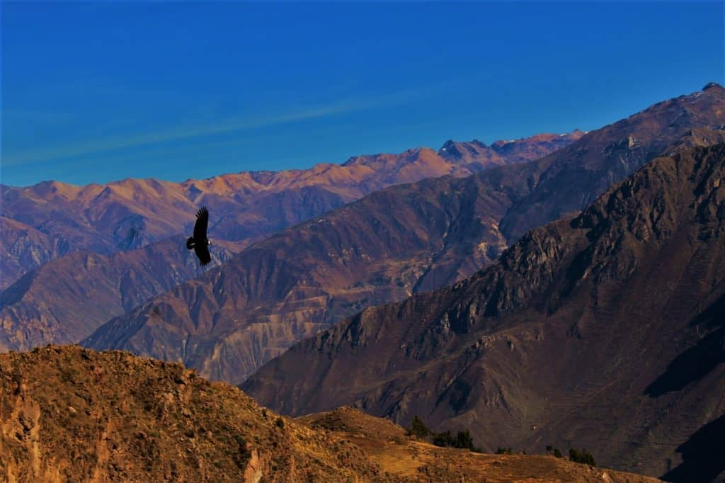 Condors Colca Canyon 2 day tour