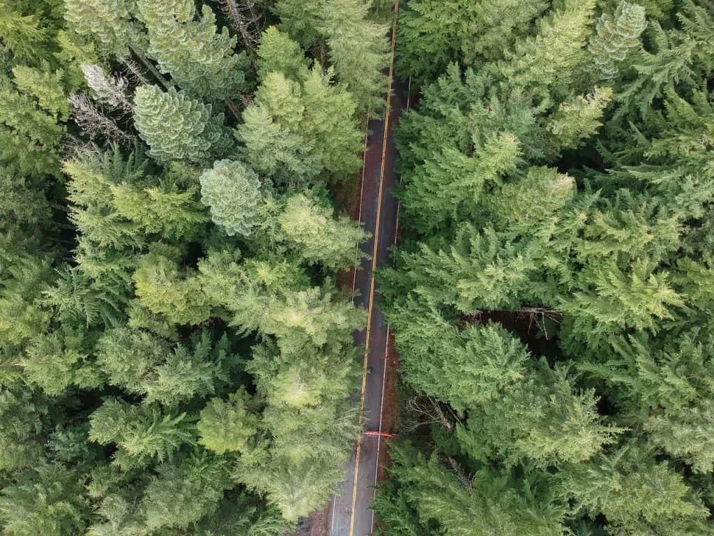 Forest Park Portland Oregon