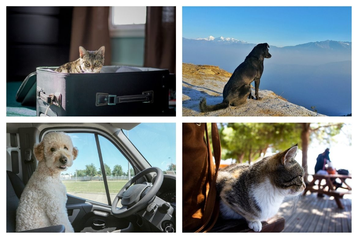 Pet Travel Transport - Tips for Traveling with a Furry Friend