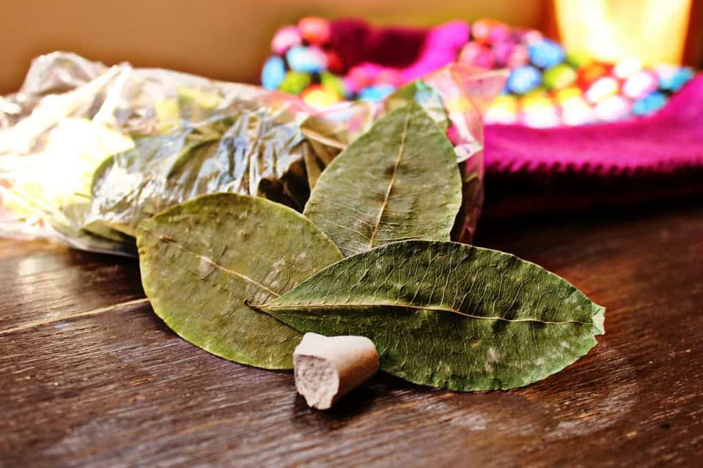 coca-leaf-andes-arequipa-peru-travel-guide