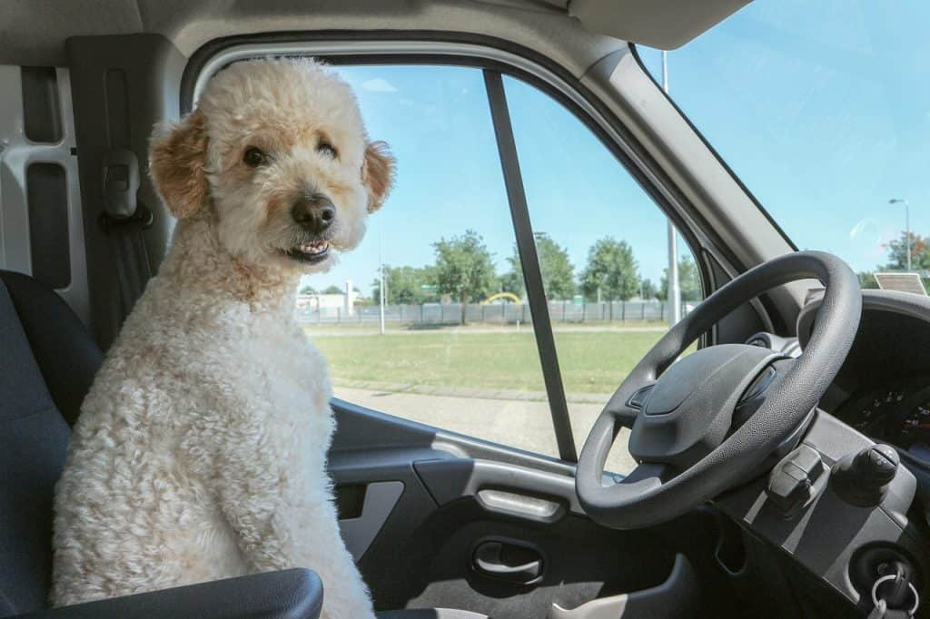 traveling-with-a-dog-in a car-travel-animals
