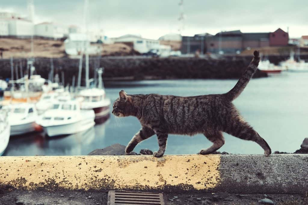 traveling-with-pets-cat-pet-travel-transport