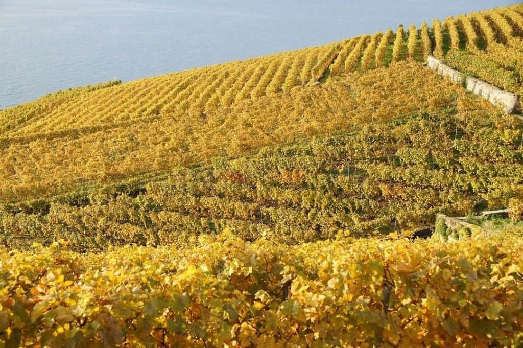 Lavaux vineyards in fall - Romandie - Switzerland