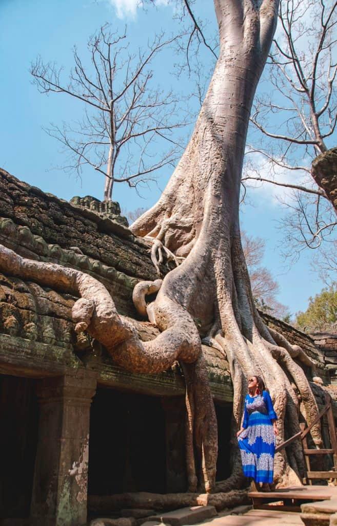 Ta Prohm - Tomb Rider - Tree - Angkor Temple