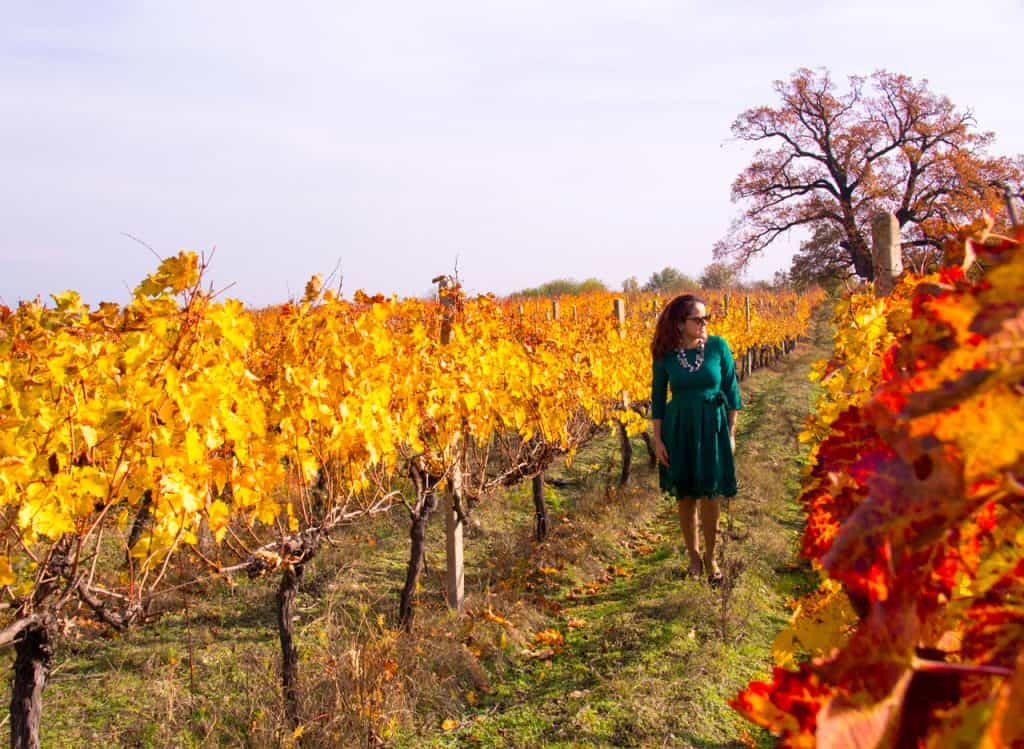 Wine-region-Georgia-country-autumn-Fall