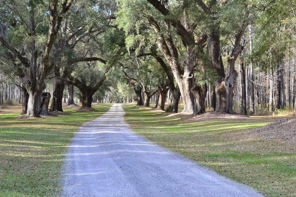 oak-trees-road-south-carolina